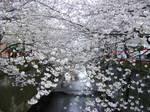 桜NO・1